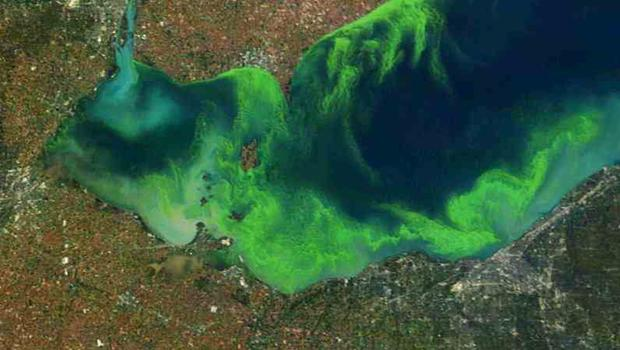 Lake Erie's 2011 algal bloom, satellite view.