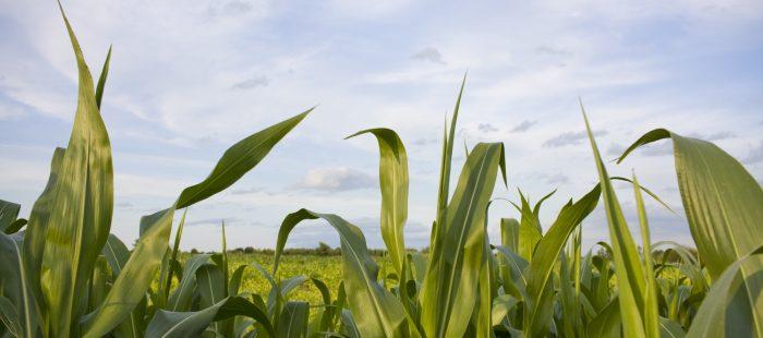 Hardship Waivers Undermine RFS – and Farmers